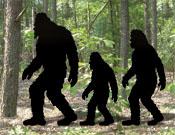 Bigfoot Patterns
