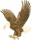American Bald Eagle Intarsia Pattern