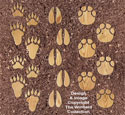 Giant Animal Print Stepping Stones Pattern