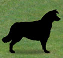 Border Collie Shadow Wood Pattern