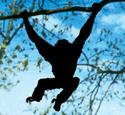 Hanging Monkey Shadow Wood Pattern