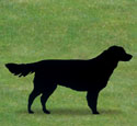 Standing Golden Retriever Shadow Wood Pattern
