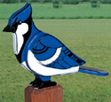 3D Giant Blue Jay Woodcraft Pattern
