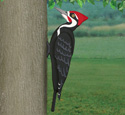 3D Giant Pileated Woodpecker Pattern