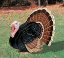 3D Life-SizeTurkey Woodcrafting Pattern