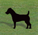 Jack Russell Terrier Shadow Wood Pattern