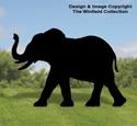 Large Elephant Shadow Wood Pattern