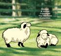 His Lambs Pattern